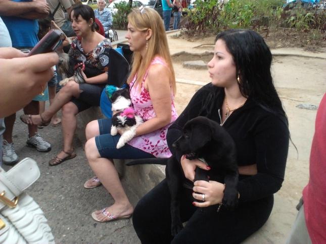 Labrador preto de 2 meses, vermifugado e vacinado, vendido a R$350,00