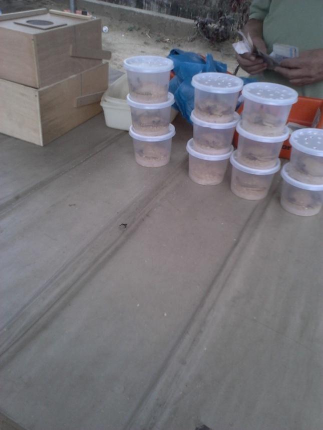Larvas servem de alimento para pássaros
