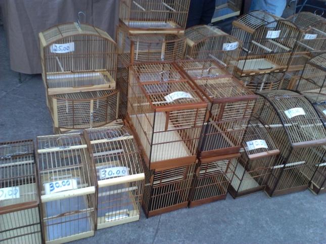 O futuro lar de calopsitas, canários e toda sorte de pequenos pássaros