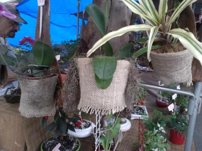 Plantas embutidas - toda variedade de tamanhos e preços